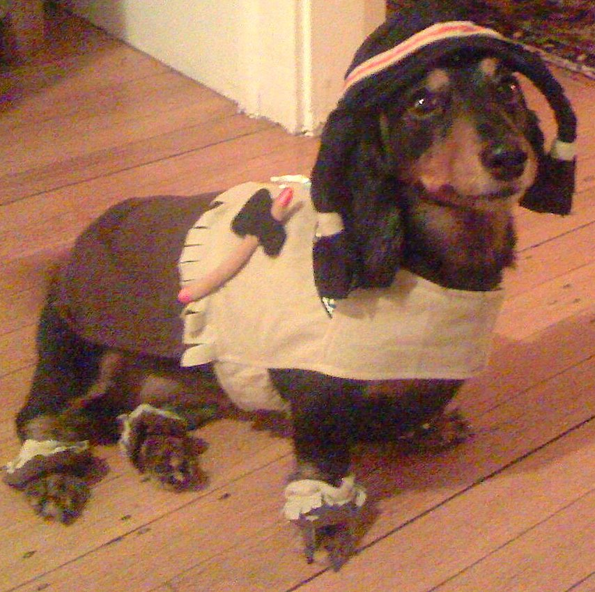 Kyley daschund dressed up for Thanksgiving